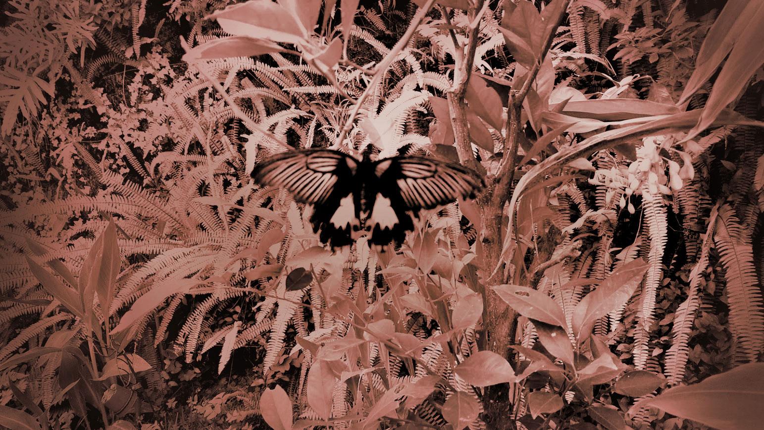Marlene's Blooming Arts